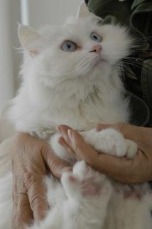 Pinky, lovely cat of my friend, Lambert Chan